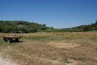 Weinberge und Landwirtschaft prägen die Colli.
