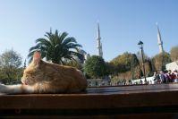 Katze sonnt sich vor der Blauen Moschee.