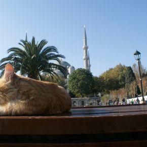 Istanbul und seineMoscheen