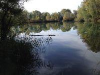 Ein Krokodil im alten Rhein?