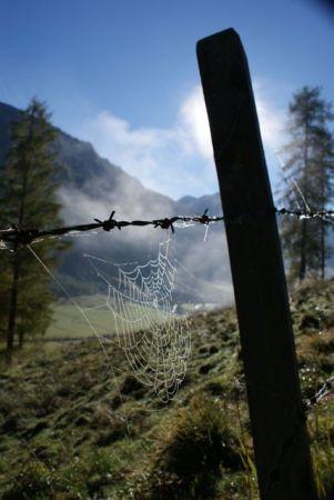 So ein Spinnennetz ist ein wahres Kunstwerk.