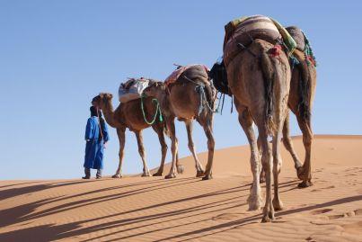 Unser Guide mit unseren Kamelen - unermüdliche Wanderer.