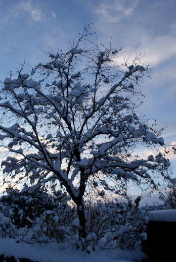 Tierverschneite Bäume - 2013 ein oft gesehenes Bild.