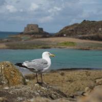 Die Möwen eröffnen die Jagd auf die zugänglichen Leckerbissen des Meeres.