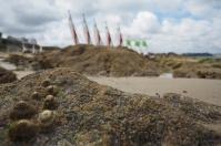 Muscheln werden von den Vögeln geschnappt und auf Felsen fallen gelassen.