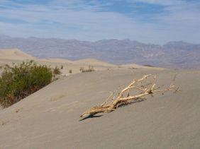 Die Dünen haben uns 2006 besonders gut gefallen.