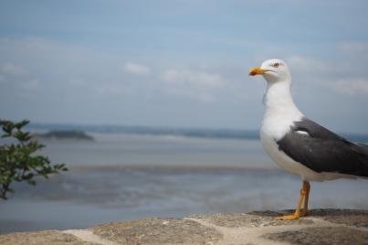Die Möwen genießen ebenfalls den Blick auf das zurückweichende Meer.
