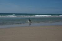 Auch dieser Hund genießt den Strand an der St. Ouens Bay.