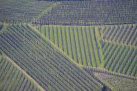 Blick hinunter auf die Weinstöcke am Talgrund des Vinschgau.