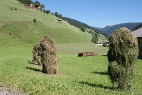 Villgraten-Tal – auf den Spuren derSchafe
