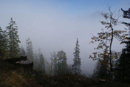 Was den weg durch den Wald zu einem mystischen Erlebnis machte.