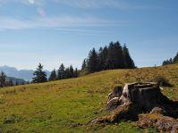 Die Alpen sind bereits wieder verlassen, die Wiesen aber noch kurz abgegrast.
