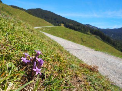 Nicht nur im Frühling kann man das Aufblühen der Natur erleben.