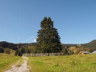 Bei diesem Baum gibt es einen tollen Rast- und Spielplatz - ideal für eine Pause.