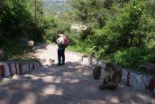 Bettelnde Affen bevölkern den Fuss des Hügels.