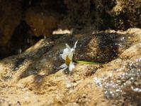 Die vielen Quellen seitlich des Baches sorgen für viel wunderbare Fauna.