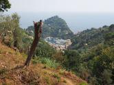 Schließlich der Blick auf den Hafen von Portofino - nun geht es nur mehr bergab.