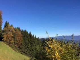 Der Herbst ist ein Künstler und verziert die Bäume mit herrlichen Farben.